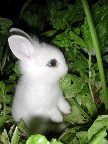 White Rabbits | Inkings and Inklings